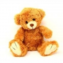 Teddy Cute