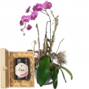 Noble Orchid (plant) with Swiss blossom honey