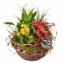 Bright Indoor Plants in a Basket
