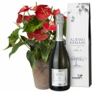 Anthurium plant in a cachepot with Prosecco Albino Armani DOC (75cl)