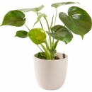 Plant: Green plant including pot