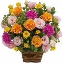 Arrangement of multicolored flowers
