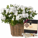 Azalea (white) with Gottlieber Hüppen and hanging gift tag «Thank You»