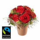 In Love! with Fairtrade Max Havelaar-Roses - Small Blooms